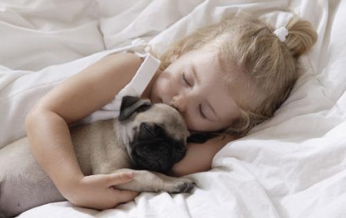 Zoonoze - bolesti prenosive sa životinja na decu